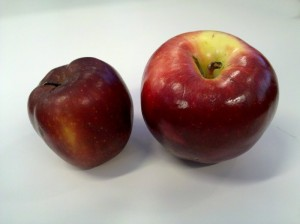 My apple (on the right) vs. Panera apple
