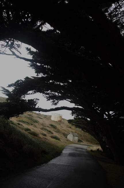 Cypress trees bent from the wind